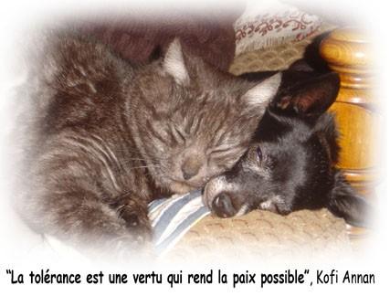 chien-et-chat-en-Paix%5B1%5D